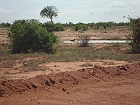 comp_tsavo-ost-hyane-www-lofty-tours-com
