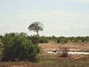 comp_tsavo-east-hyana-www-lofty-tours-com