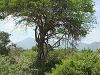 comp_tsavo-east-lepard-www-lofty-tours-com