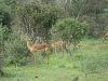 comp_tsavo-east-www-lofty-tours-com-3