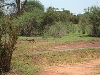 comp_tsavo-east-www-lofty-tours-com-4