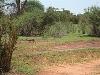comp_tsavo-east-www-lofty-tours-com-4