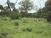 comp_tsavo-east-www-lofty-tours-com